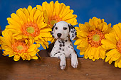 PUP 03 RK0228 01