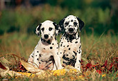 PUP 03 SS0001 01