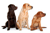 PUP 04 AC0002 01