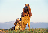 PUP 04 CB0002 01