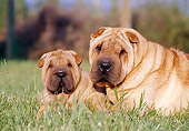 PUP 04 CB0006 01