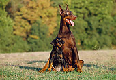 PUP 04 CB0008 01
