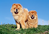 PUP 04 CB0013 01