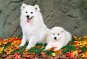 PUP 04 FA0023 01