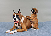 PUP 04 FA0025 01