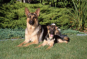 PUP 04 FA0026 01
