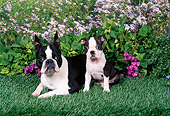 PUP 04 FA0031 01