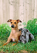 PUP 04 FA0033 01