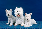 PUP 04 FA0035 01