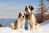 PUP 04 JE0001 01