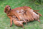 PUP 04 JE0007 01