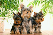 PUP 04 JE0009 01