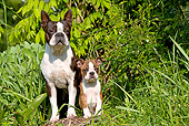 PUP 04 JE0010 01