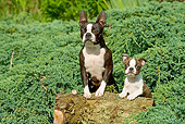 PUP 04 JE0011 01