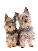 PUP 04 JE0017 01