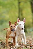 PUP 04 JE0018 01