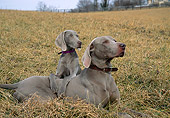 PUP 04 JN0001 01