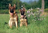 PUP 04 KH0023 01
