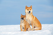 PUP 04 KH0025 01
