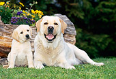 PUP 04 KH0026 01