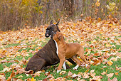 PUP 04 LS0001 01