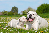 PUP 04 PE0002 01