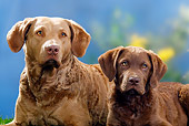 PUP 04 PE0006 01
