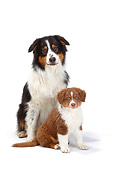 PUP 04 PE0013 01