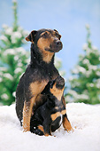 PUP 04 PE0015 01