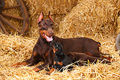 PUP 04 PE0018 01