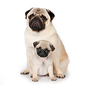 PUP 04 RK0004 01