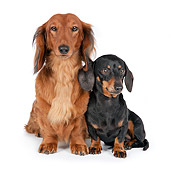PUP 04 RK0006 01