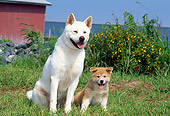 PUP 04 CE0001 01