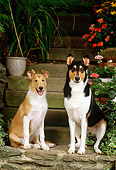 PUP 04 CE0002 01