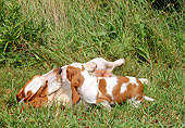 PUP 04 CE0003 01