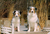 PUP 04 CE0006 01