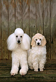 PUP 04 CE0009 01