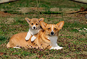 PUP 04 CE0012 01