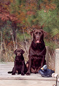 PUP 04 CE0014 01