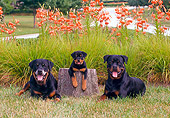 PUP 04 CE0017 01