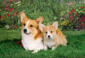 PUP 04 FA0003 01