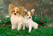 PUP 04 FA0004 01
