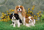 PUP 04 FA0005 01