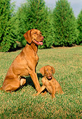 PUP 04 FA0006 01