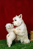 PUP 04 FA0009 01