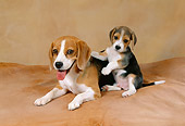 PUP 04 FA0013 01