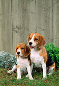 PUP 04 FA0014 01