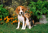 PUP 04 FA0015 01