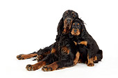 PUP 04 JD0002 01
