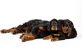 PUP 04 JD0003 01